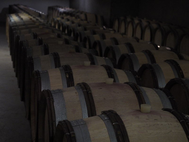 Barrique Keller am Weingut Gottardi Mazzon