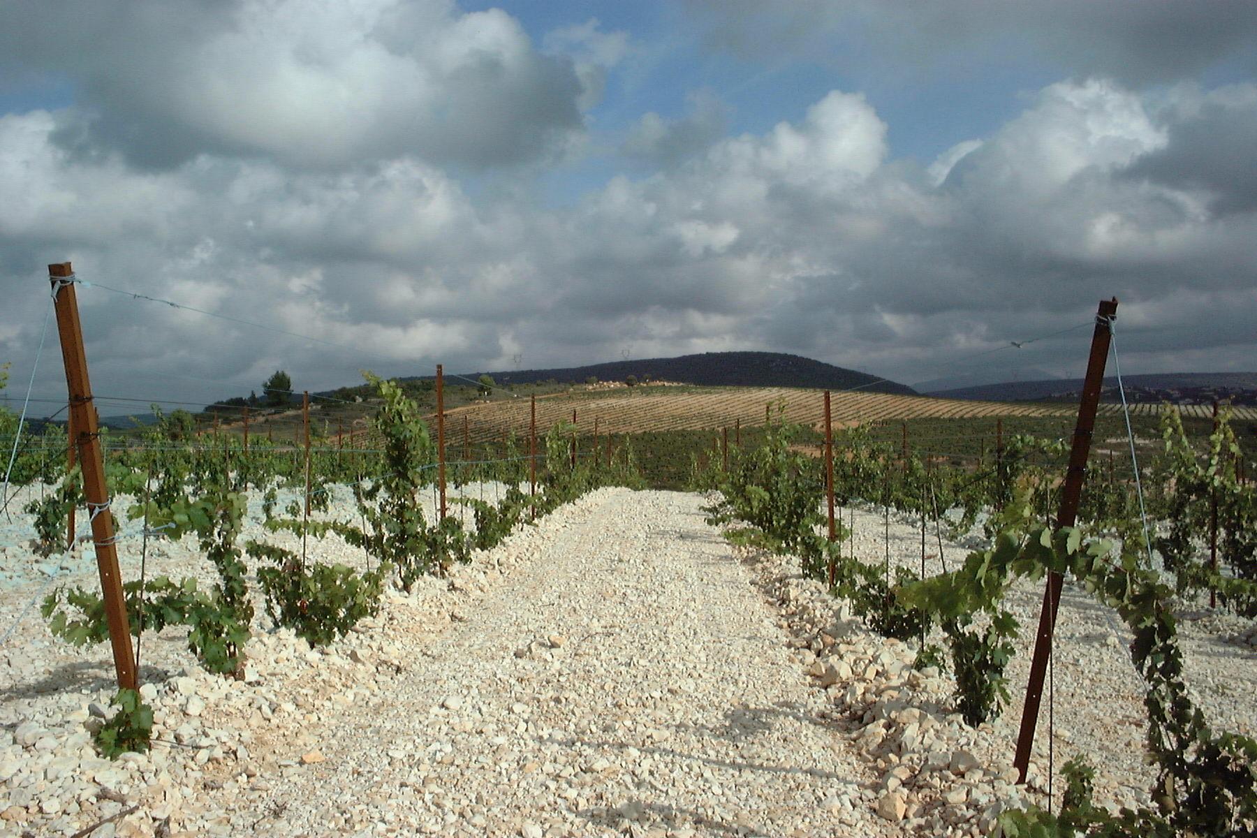 Das Terroir der Domaine Montlobre
