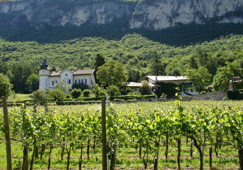 Das Weingut Gottardi Mazzon im Bozner Unterland