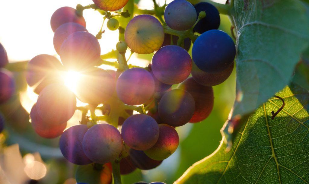 Der Herbst mit seinem warmen Licht lädt ein zur Weinverkostung.