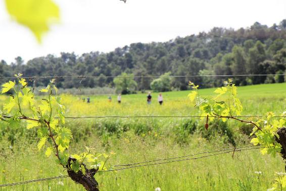 Gottardi-Kunden in den Weingärten der Domaine de La Jasse.