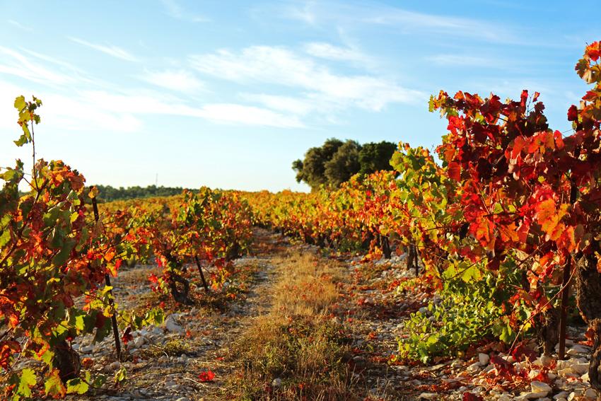 Herbststimmung in Südfrankreich