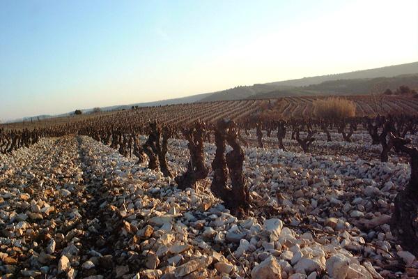 Der magische Zwei-Sonnen-Weingarten, übersät von tausenden kleinen weißen Steinen für doppelte Energie.