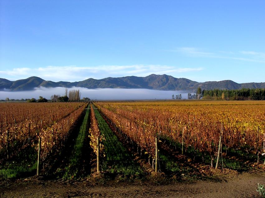 Weingarten Los Vascos