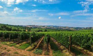 TOSKANA: In einer bestechend schönen Landschaft entstehen einige der besten Weine der Welt.