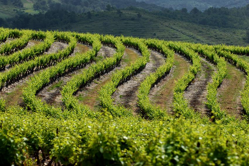 Im Süden Frankreichs findet jener Wein seinen Ursprung, der sich perfekt für den Ausbau in edlen Eichenbarriques und somit für Gottardis Barrique-Kollektiv eignet.