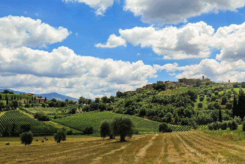 Landschaft Toskana mit vielen Hügeln und Weingärten.