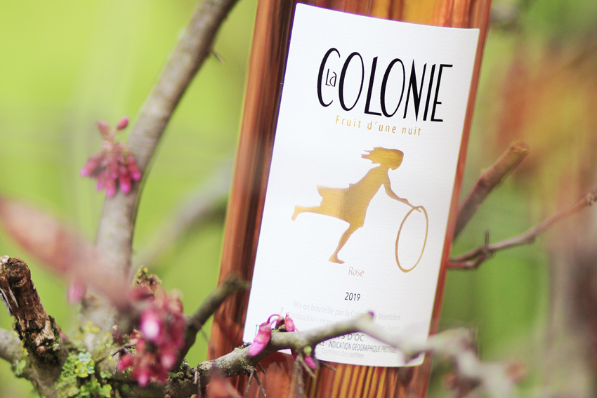 Der neue Rose La Colonie ist da!