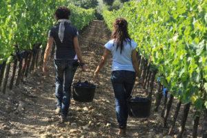Zwei Frauen mit Trauben im Weinberg.
