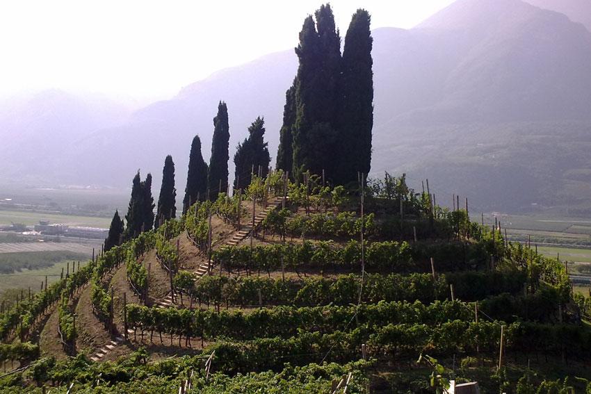 """Charakteristischer Weinberg: Der """"Ameisenhügel"""" von San Rocco bestimmt das Landschaftsbild rund um die Stadt Trento."""
