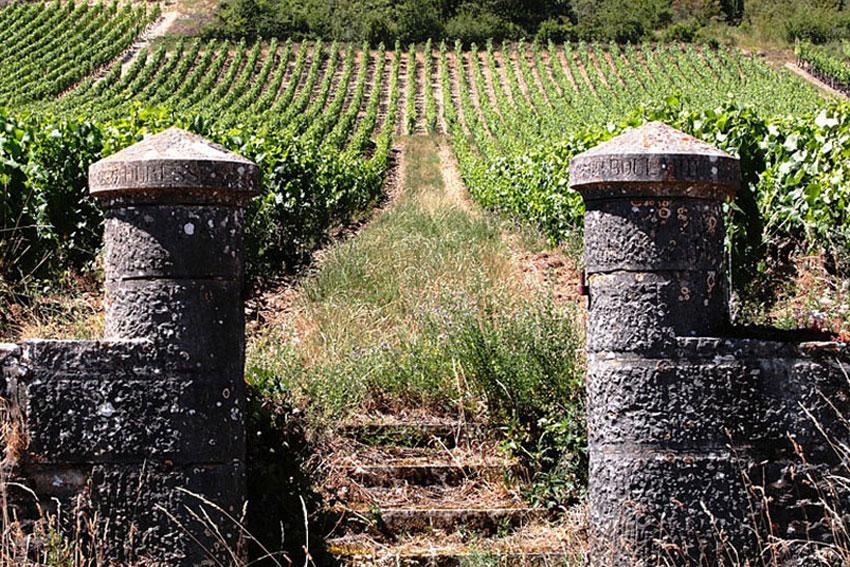 Im Burgund sind einige traditionelle Weinhäuser vertreten, die auf eine lange Geschichte zurückblicken können.
