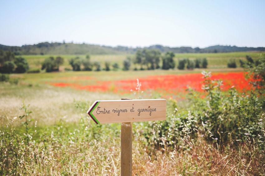 Weingarten in der Garrigue.