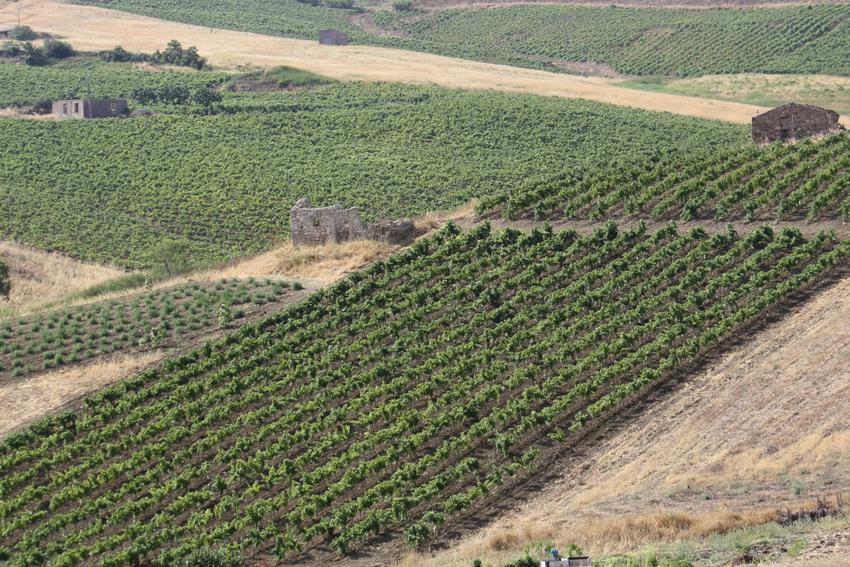 Steinruine eines Bagli in Sizilien von Weinbergen umgeben.