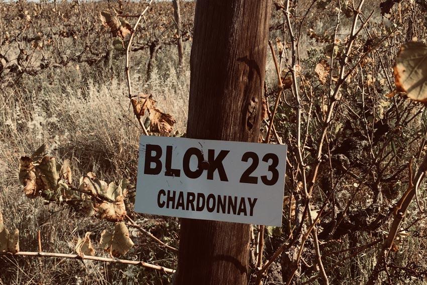 Chardonnay Weingarten des Weinguts Running Stream.